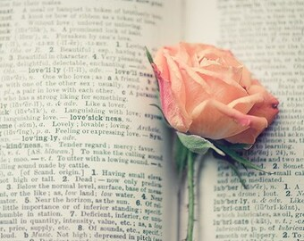 book love rose photography / flower, text, print, rose, pink, peach, apricot, valentine, still life / lovesickness / 8x10 fine art photo