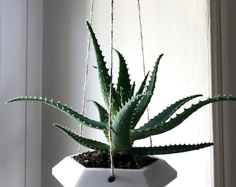 Hexagonal hanging pot