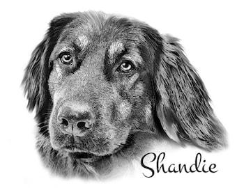 Pet Portrait - Digital Sketch - Custom Dog portrait - sketch from photo - Dog art - digital sketch portrait - Pet Art - Best Friend Art