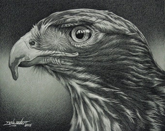 Red Tail Hawk Giclee Print