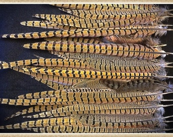 """15 to 20 Imperfect feathers from pheasants and turkeys approx. 4"""" to 20"""""""