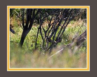Hiding in the brush, Deer, Original Fine Art Photography