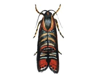 Psychedelic Jones Moth