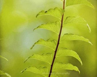 Green Fern Nature Photography - woodland wall art, zen home decor photo