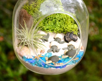 Sea Turtle Beach Terrarium Kit ~ Small Bullet Shaped Air Plant Terrarium Kit ~ Coastal Living Decor~ 4 Hatching Sea Turtles + 2 Sea Turtles