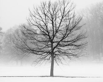 Winter tree landscape photography. Peaceful nordic art. Black and white nature photograph for therapist office. New job gift for botanist.