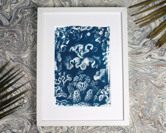Coral Reef Drawing by  Ernst Haeckel, Cyanotype, Marine Biologist, Coral Pattern, Coral Reef Drawing, Sea Coral, Sun Print, Trending 2018
