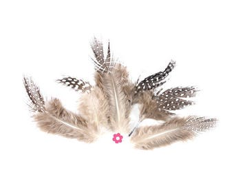 x 10 natural 7 to 13cm (19) Guinea fowl feathers