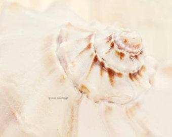 Seashell Photography Print, White Seashell Print, Brown and White Nautical Art, Shell Wall Art, Seashell Decor, Seashell Art Print