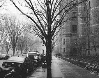 Photography, Black and White, Tree in the City