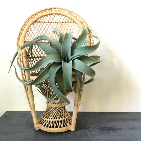 wicker mini peacock chair - rattan doll chair - plant pot stand - boho plant display