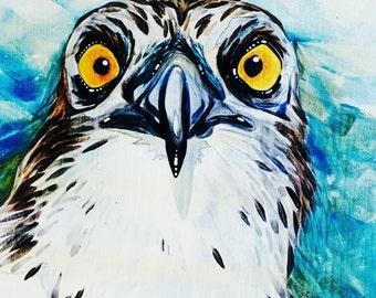 Osprey eyes