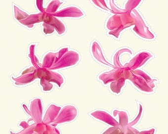 18 Hawaiian Orchid Flower Illustration: Very Realistic Digital Clipart