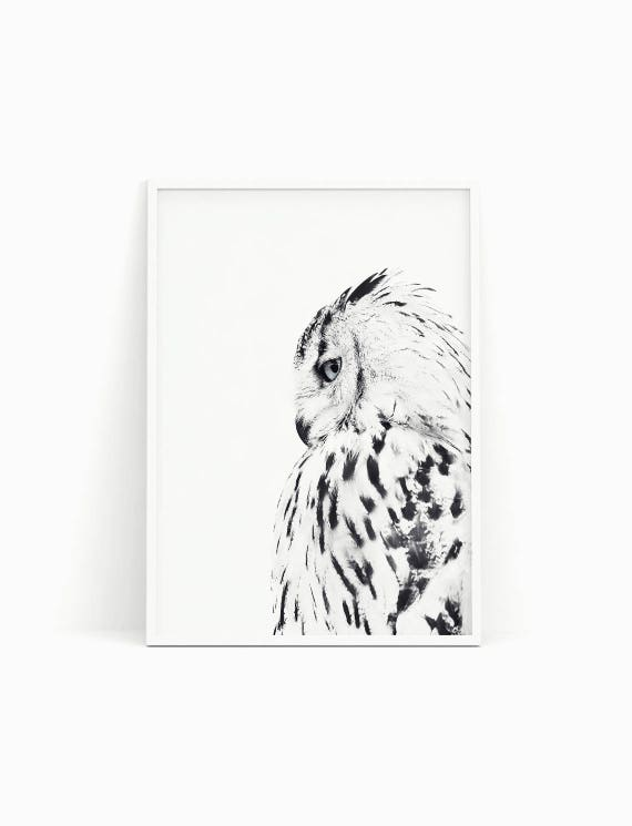 White owl poster black and white photograph scandinavian