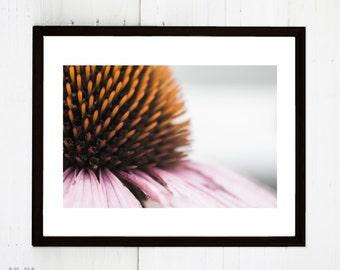 Digital Download Purple Cone Flower Photograph