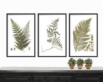 Vintage Ferns Print  - Botanical Print - Farmhouse Print - Antique Botanical Fern - Posters - Wall Art - Fern Print Set - Tropical Print Set