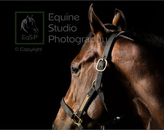 Horse Side Head Profile 1, Fine Art Print, Equine Photography