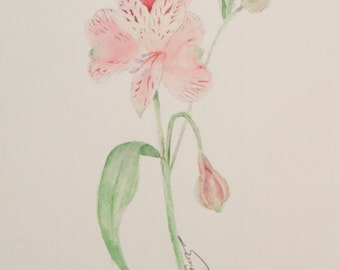 Flower Peruvian Lily Nature Original Watercolor Painting -