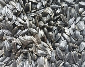 Organic sunflower Microgreen seeds