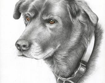 Custom Pet Portrait, Dog Portrait, Dog Art, Hand Painted Art from your Photos