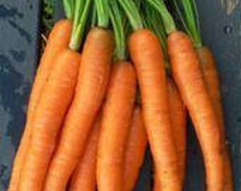 Carrot Seeds, Scarlet Nantes, Non-GMO vegetable seeds, Heirloom Vegetable Seeds, Root Vegetables, Sweet Carrots