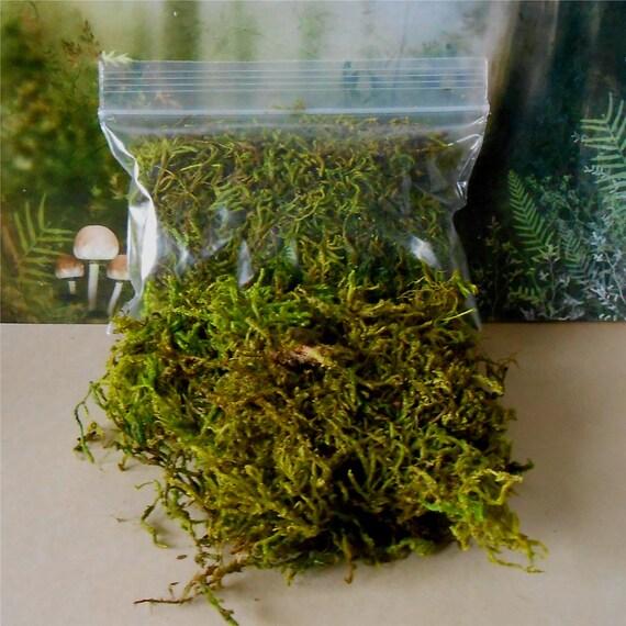 Fairy Garden Moss~Preserved Moss~Sheet Moss~Floral Supply Moss~Miniature Garden  Moss~Dyed Moss From Enchantedgardens On Etsy Studio
