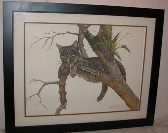 Yearling Bobcat by Richard Evans Younger Hand Signed Framed Print