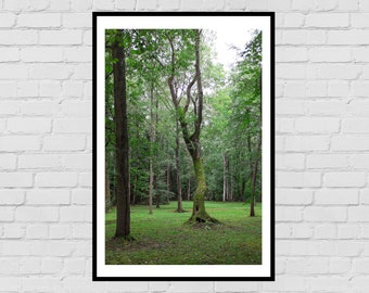 Russian forest - digital download print