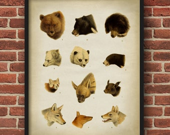 Animal heads poster, animal heads print, mammals poster, bear, hyena, wolf, fox, panda bear, scientific illustration,