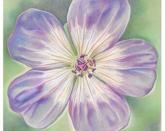 "Flower Greetings Card - ""Rozanne Geranium"""