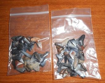 Bag of 25 Fossil Shark Teeth
