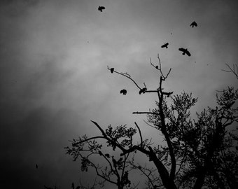 Omens, dark black and white photograph of birds and trees