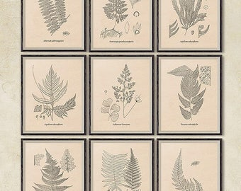 Set of 9 prints, Printable art, Fern botanical print, Fern art, Art print Vintage, Print set, Instant download botanical print set, JPG
