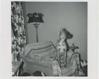 Vintage Snapshot Photo: His Chair [84666]