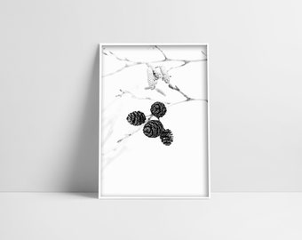 Pine Cone Art Print Minimal Home Decor Simple White Photo Digital Print Photo Pine Tree Photo Nature Photography Minimal Wall Decor Modern