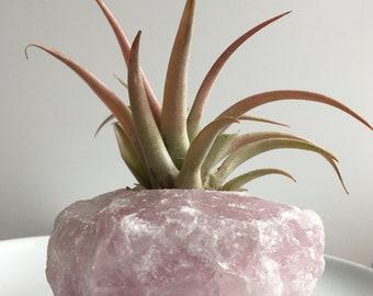 Stunning rose quartz planter with air plant (Tillandsia)