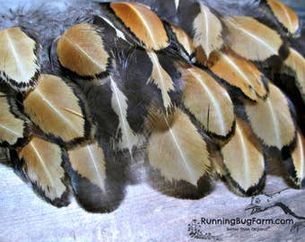 """Cruelty Free Feathers Golden Laced Craft Feathers Loose Feather Natural Feathers Real Bird Feathers For Crafts Real Feather Qty: 25 3-3.5"""""""