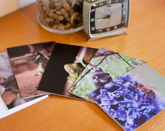 """Pack of 5 blank greeting cards - """"Aussie Creatures"""" Wallaby, Koala, Tree Frog, Honey Bee"""