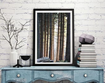 Tall trees print, forest in winter, winter trees, fine art print, nature photo, wall print, wall art, home decor, portrait print