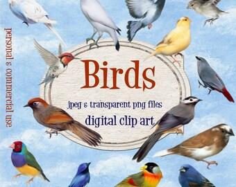 Clip Art: Birds  Png  Digital Files  no 047