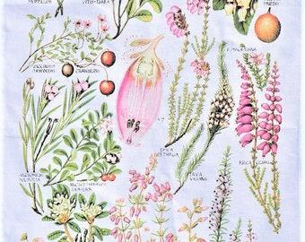 Berries botanical tea towel