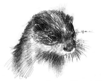 Soaking otter | Limited edition fine art print from original drawing. Free shipping