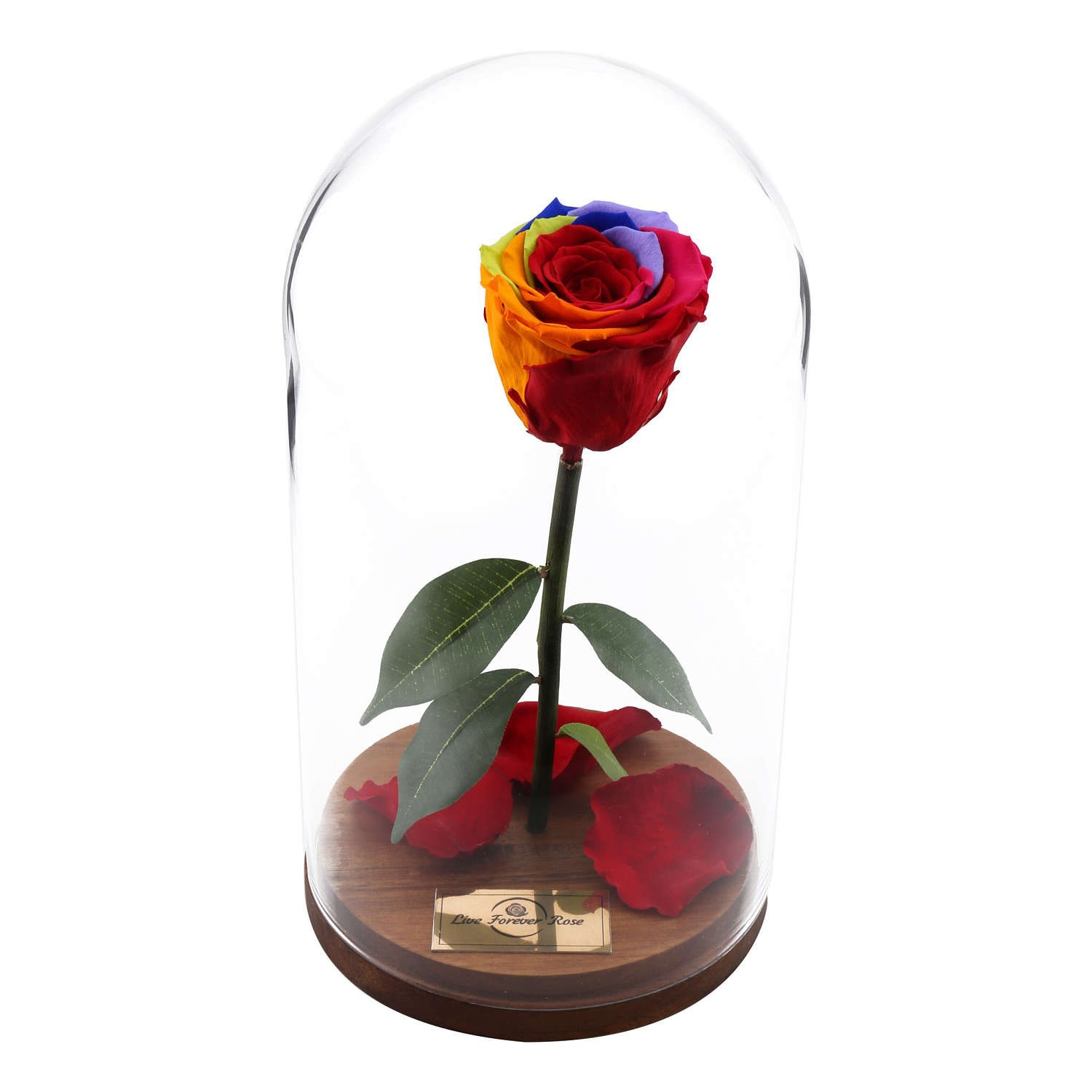 beauty and the beast rose live forever rose in glass mothers. Black Bedroom Furniture Sets. Home Design Ideas