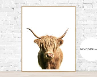 Highland Cow Print, Highland Bull Print, Printable Decor, Farm Wall Art, Cattle Photography, Digital Download, Scottish Cow Print