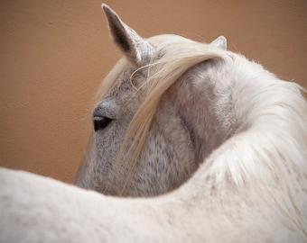 Horse art, horse photo, equine wall decor, animal print, square art print, 5x5, 8x8, 12x12