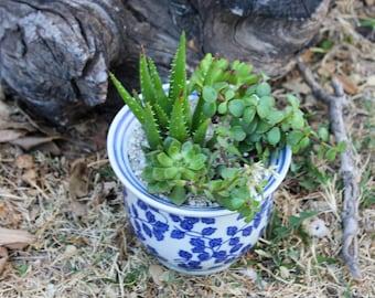 Large Royal Blue Floral Design Succulent Arrangement