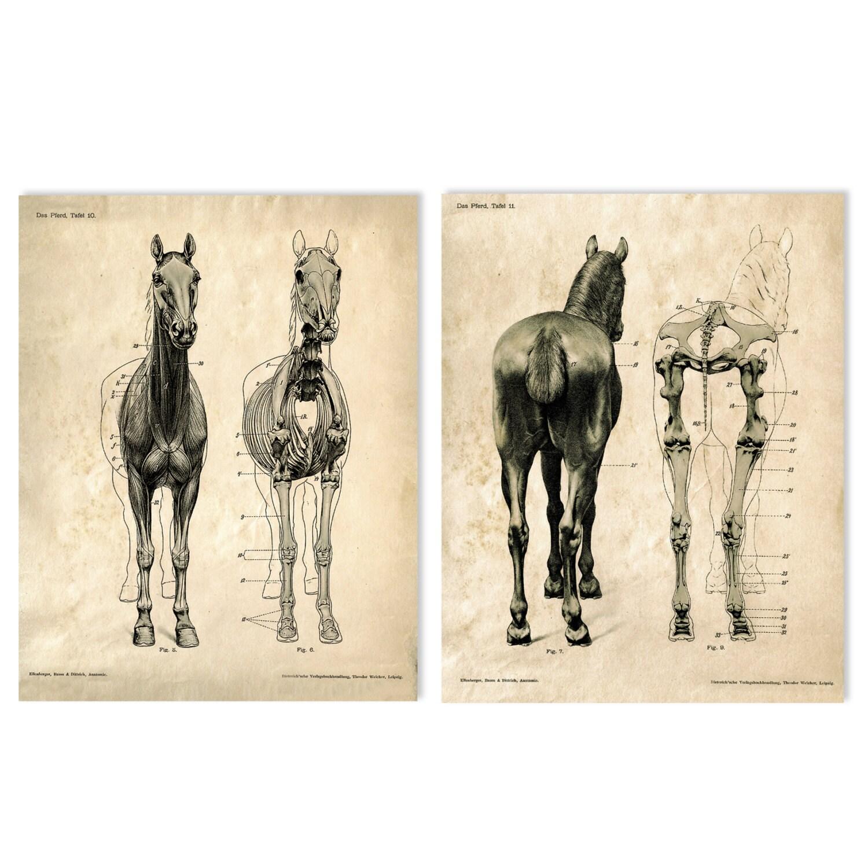 horse anatomy chart - Mersn.proforum.co