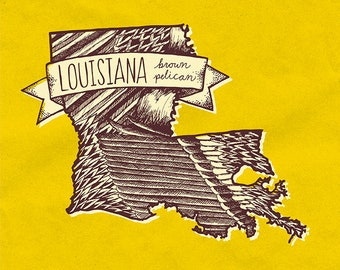 Louisiana State Bird Print- Brown Pelican, 8x10 inches.