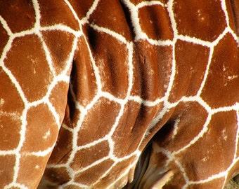 Patterened Giraffe Skin Fine Art Print