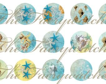 One Inch Blue Seashell Pins, Blue Seashell Magnets, Blue Seashell Flatbacks, Beach Magnets, Beach Pins, 12 ct.
